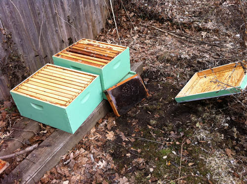 Bad News on the Bees: We Lost the Hive