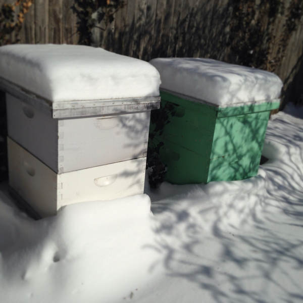 Time to Clean the Snow off the Bee Hives